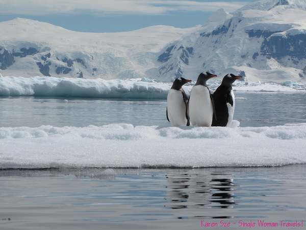 3 Gentoo penguins is a crowd - even on an iceberg