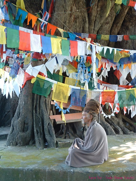 A sādhu in contemplation under a tree with prayer flags in Lumbini, Nepal