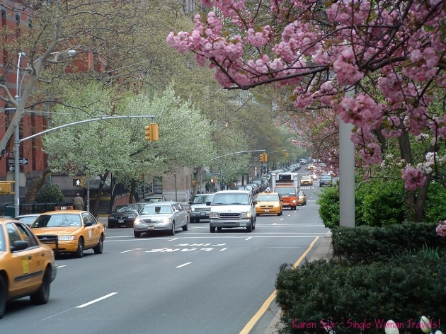 Cheery Blossoms in New York City