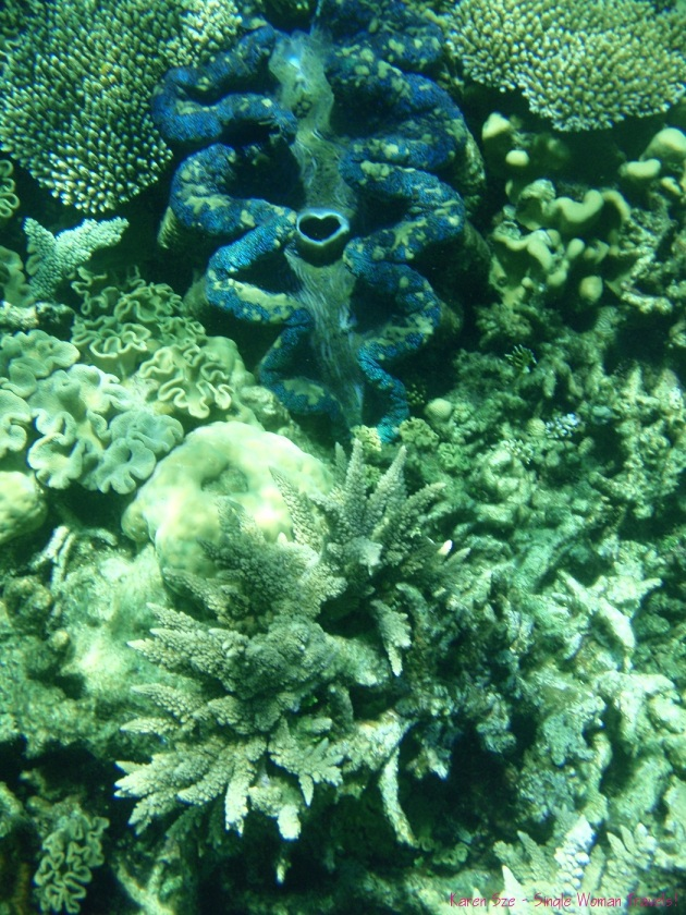 Beautiful Giant clam with a heart shaped mouth at Great Barrier Reef, Australia