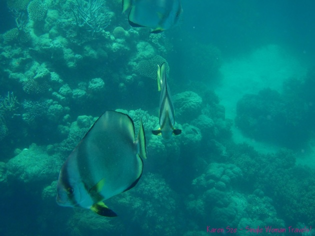 Beautiful fish in the Great Barrier Reef, Australia