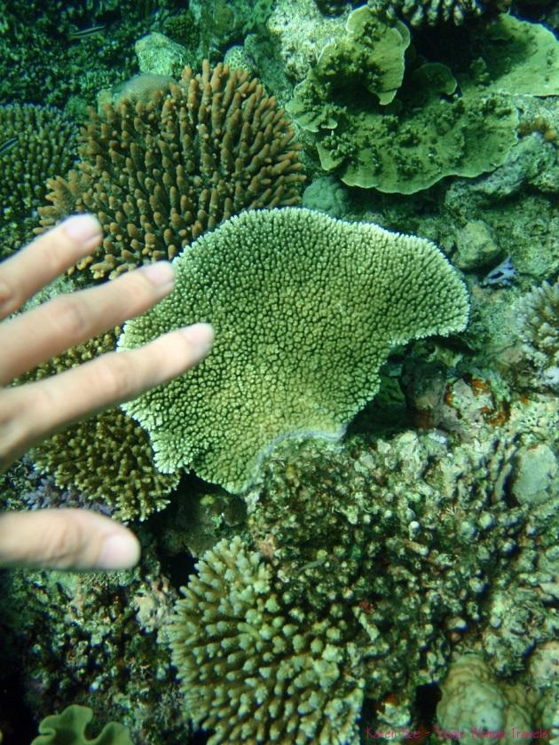 Hands off Great Barrier Reef Australia