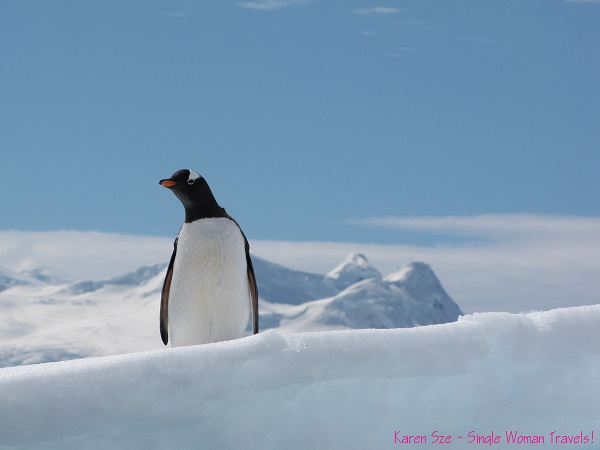 Look forward to Reason #2  (Gentoo penguin on Antarctica peninsula)