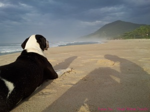 Maresais Brazil beach dog shadow sand