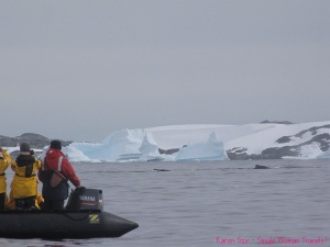 Whales spotted! Zodiac and driver shown in the foreground