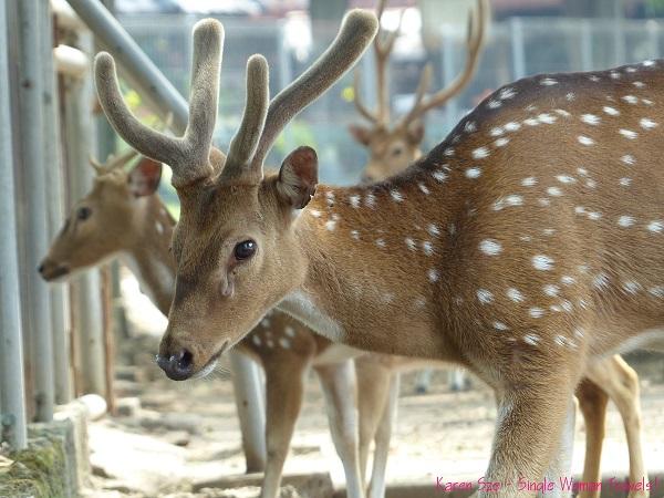 Bambi at Prambanan