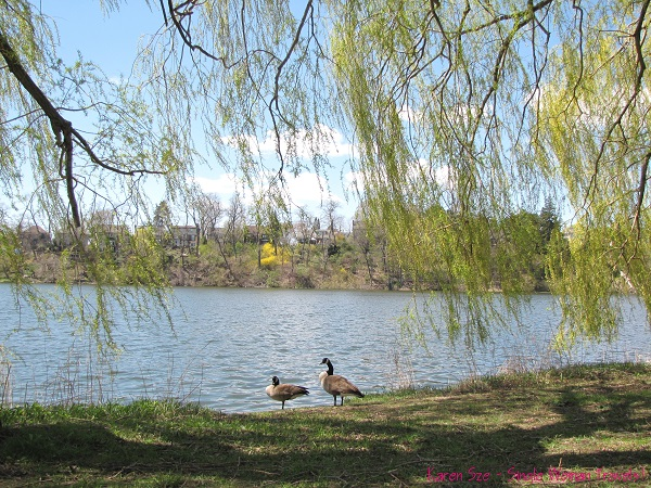 Pair of Canada geese in High Park, Toronto, Canada