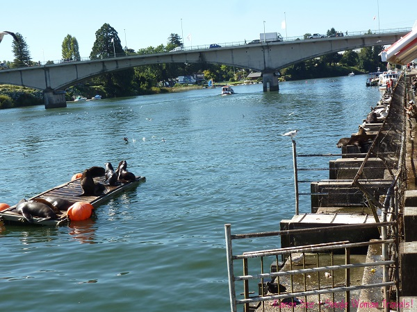 Seals, cormorant, vultures and seagulls feast at Valdivia Fish market