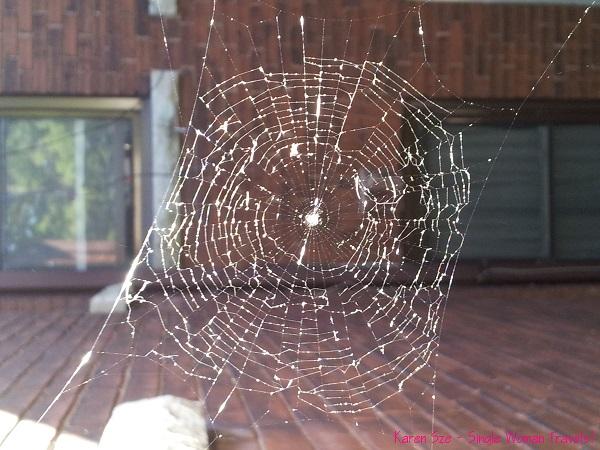 Spider web glitters in sunlight