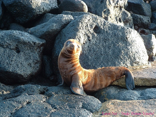 Baby fur seal basking in the spring sunlight