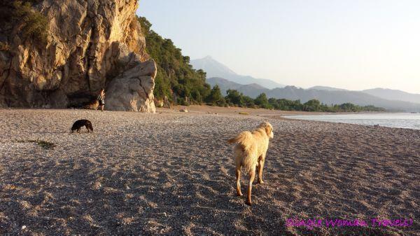 Four legged escorts to Olympos beach