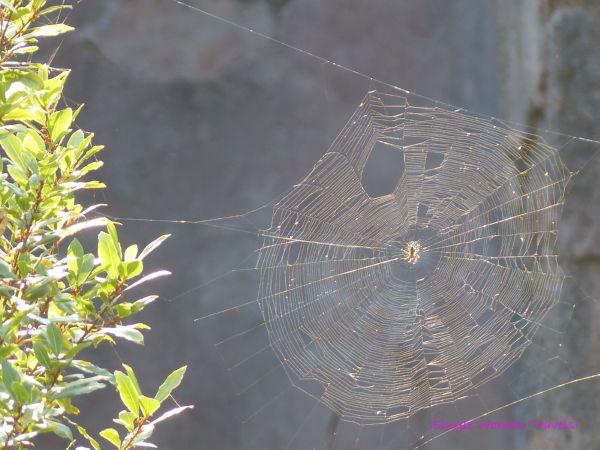 Sun glow spider web life