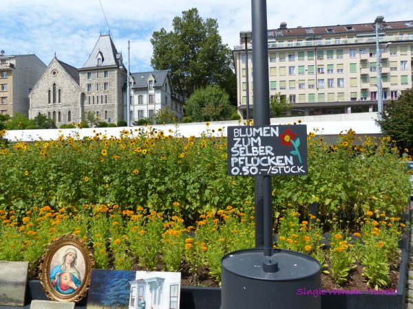 Chance to pick my own flowers for a small price Lausanne Switzerland
