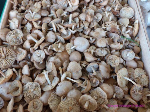 Mushrooms market Lausanne Switzerland