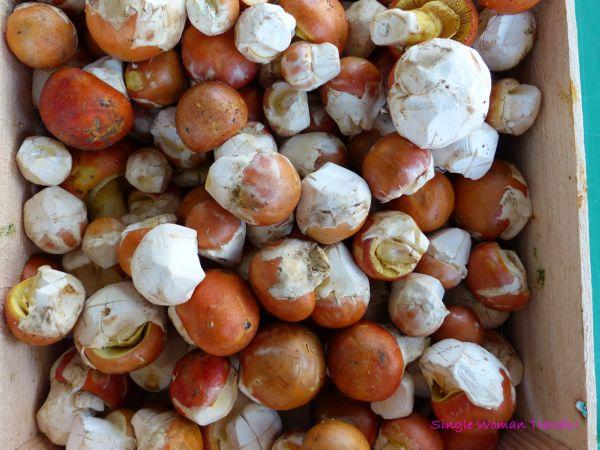 Mushrooms at the farmers market Lausanne Switzerland
