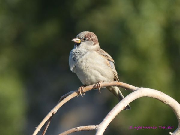Anticipation - Sparrow sitting on a tree branch looking forward to a bright future