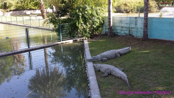 Crocodile farm at Hamat Gader Israel hot spring spa