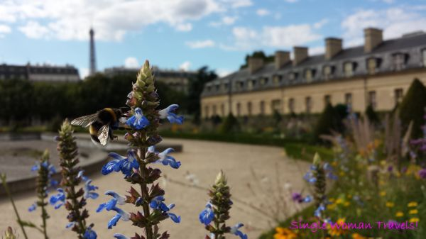 Bee pollinating in Paris France with the Eiffel tower in the background