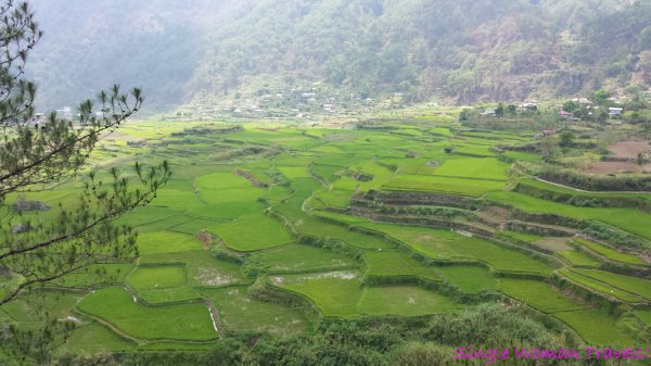 Rice terraces of Sagada Iloco Sur Philippines